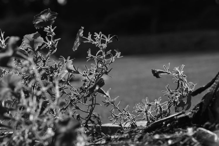 Beauty In Nature Blackandwhite Close-up Day Flower Fragility Freshness Growth Insect Light And Shadow Nature No People Outdoors Plant