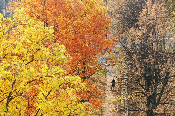 Autunno  Autunno🍁🍁🍁 Autunno Autumn Colors Colori Landscape Paesaggio Autunno  Autunn Torino Torino ❤ Torinoélamiacittá EyeEm Gallery