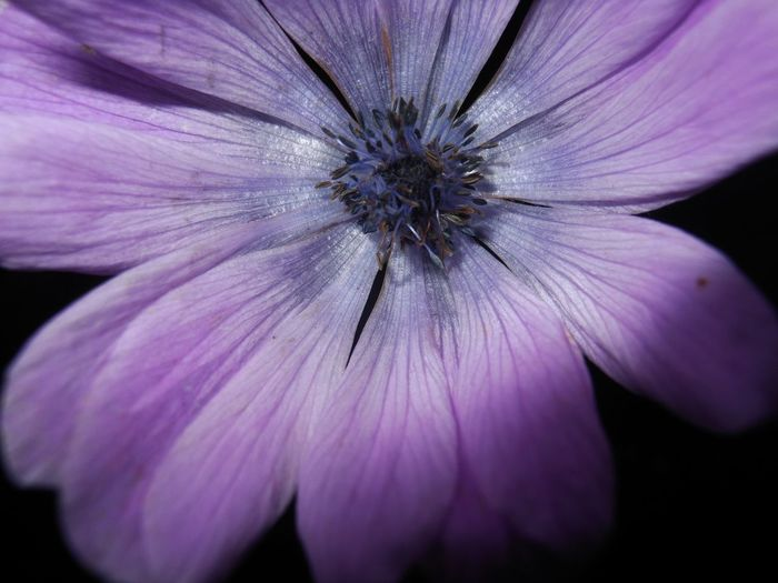 Close-up of fresh purple flower blooming outdoors