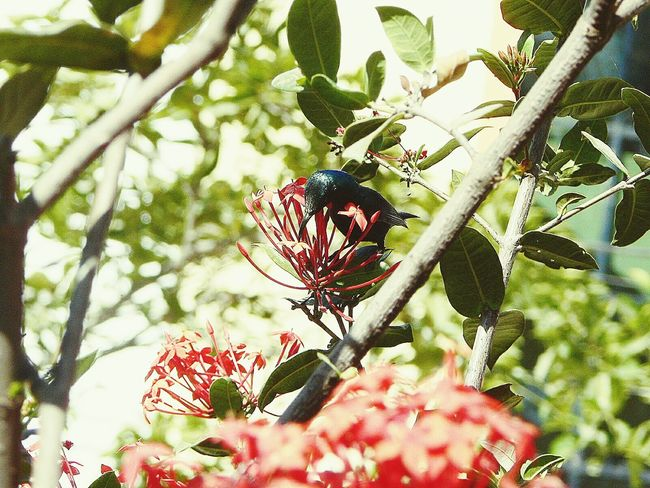 Birds_collection Birds Of EyeEm  Birdwatching Small Birds Sunbird Colorful Blue Bird Nectar Drinking EyeEm Birds Eyem Best Shots The Bird Shot