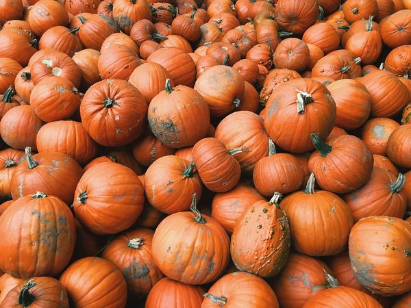 Pumpkins Orange Bright Colors Autumn Abundance Large Group Of Objects Halloween Close Up Vegetable
