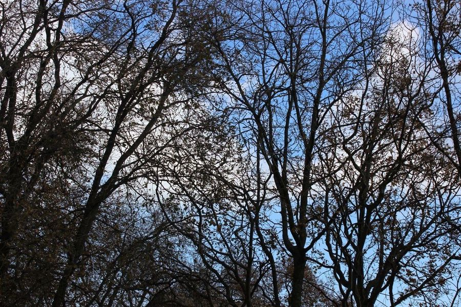 Trees 🌲 Sicily Trees And Sky Picoftheday Phrobisantos Italy EyeEm