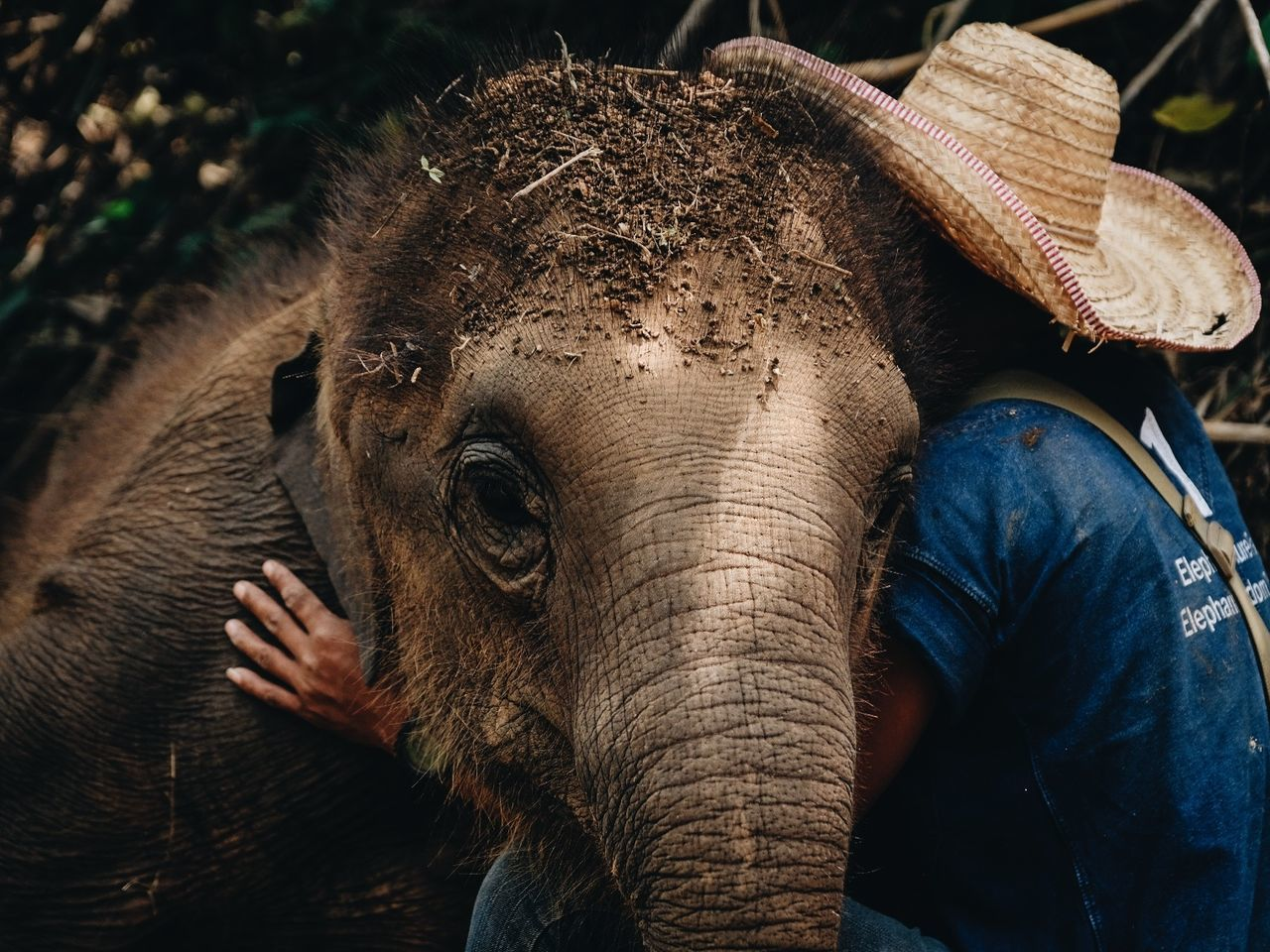 Close-up of peron hugging elephant