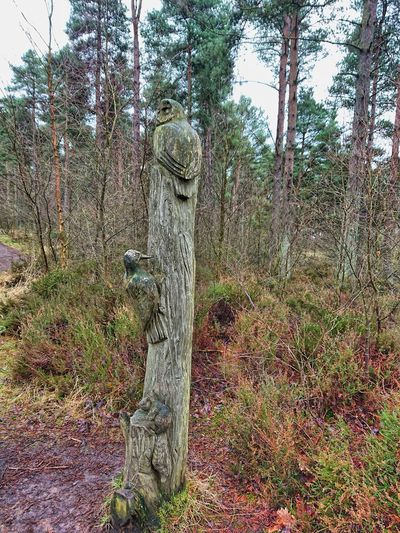 Devilla Forest Tree Forest Tree Trunk No People Day Nature Statue Outdoors Beauty In Nature Sky Sculpture