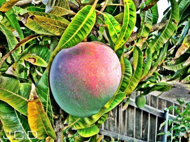Flora Trees Fruit HDR