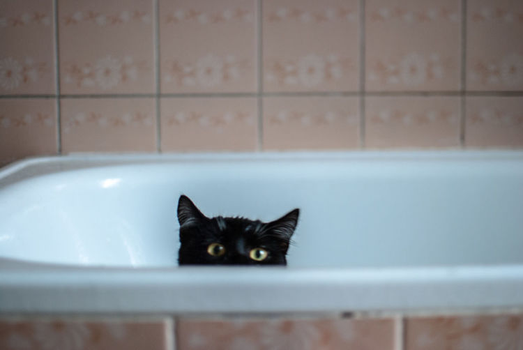 Portrait Of Cat Hiding In Bathtub