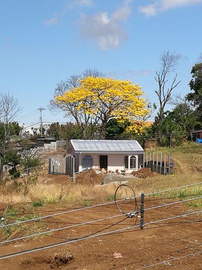 Fgugal Tree Built Structure Rural Scene