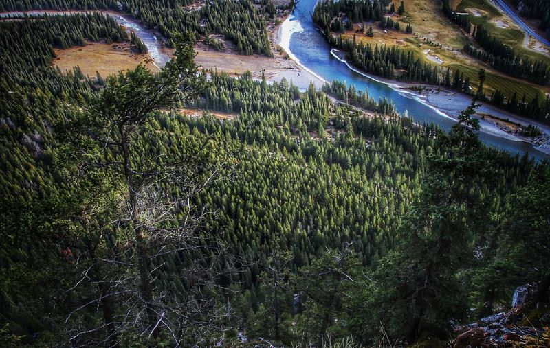 Drone's Angle Nature Earthfocus Birdeyeview Drone  Explorealberta Theoutbound Wildernessculture Forest Landscape River Adventure Visualoflife Alberta Canada Green Forest Drone  Ourdailyplanet Getoutstayout Wanderlust Outdoorlifestyle Adventure Outdoors Wilderness Nature Day Outdoors No People Beauty In Nature Water