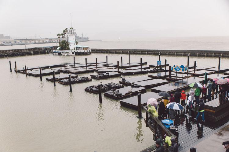 Bay City People Rainy Seals Travel Watching Water