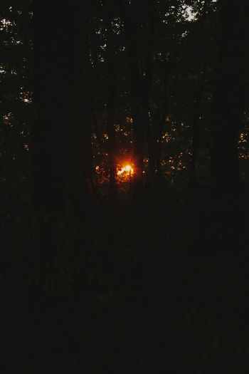 Sunlight streaming through trees at night