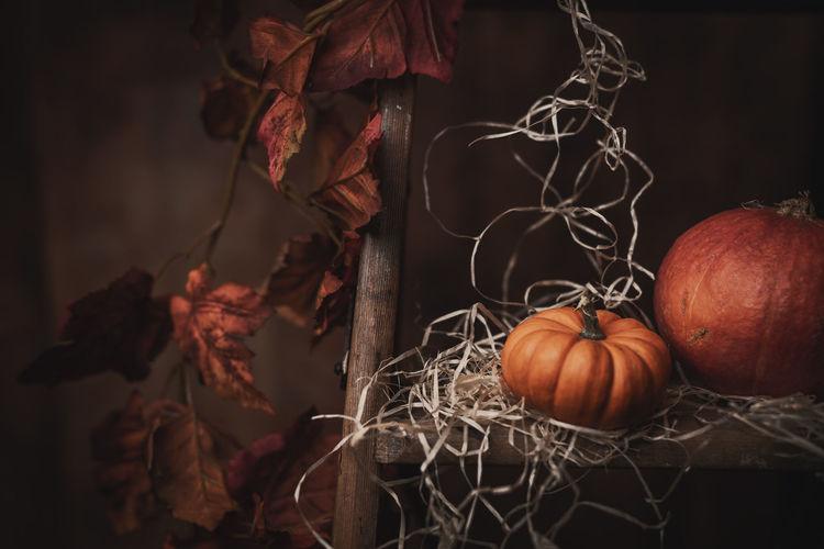 Close-up of pumpkins in autumn