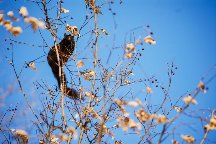 Squirrel views Plant Sky Low Angle View Blue Nature Growth Tree Day Selective Focus No People Branch Clear Sky Beauty In Nature Flower Flowering Plant Animal Themes Animal Vertebrate Animal Wildlife Bird Outdoors