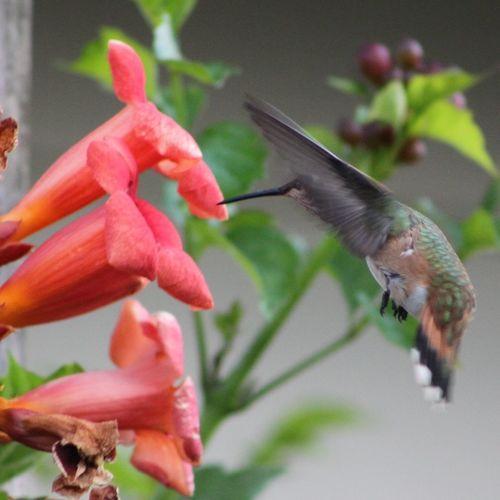 Hummingbird I Love Nature! Moms House