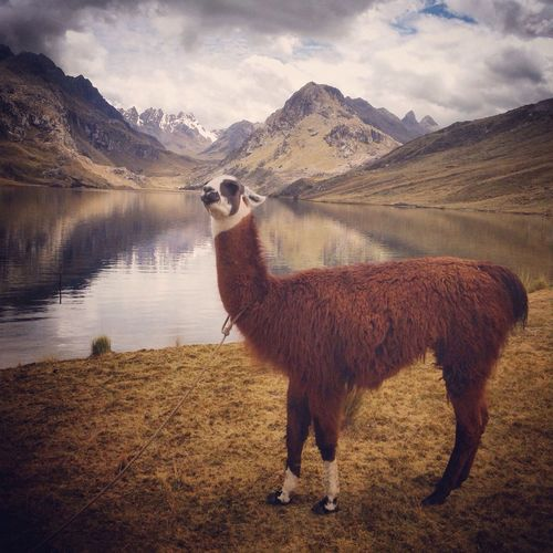 Scenic view of animal by lake