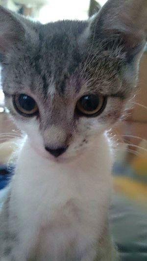 My little cat First Eyeem Photo