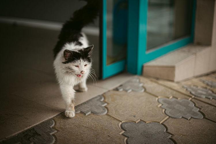 Portrait of kitten on floor at home