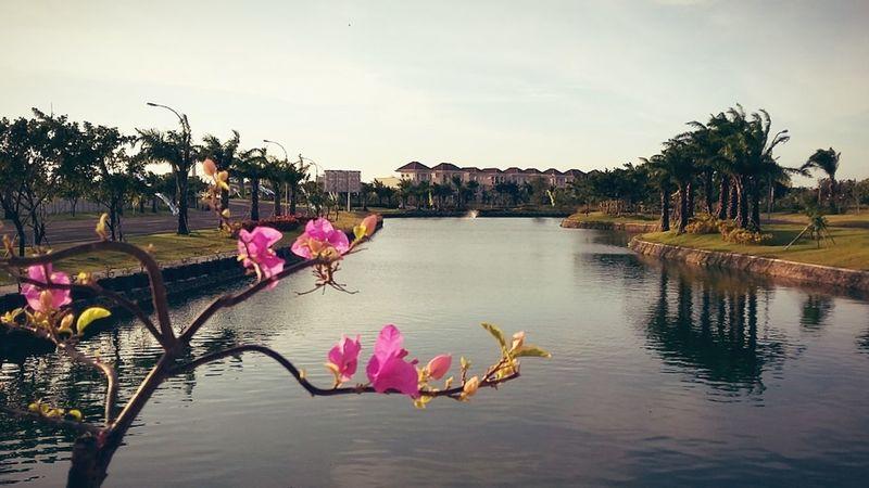 I love this lake Lake View Handphonephotograhy Jogging Time Bycycle Garden Flowers Flower Plants Landscape_photography Landscape View Afternoon Views Surabaya City Surabaya INDONESIA