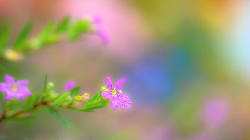 My mom loved garden. There is full colors even now. Colour Of Life Macro Nature Flower Still Life Colorful In My Garden Flowerlovers Bokeh Photography Soft Blooming From My Point Of View EyeEm Nature Lover Getting Inspired EyeEm Gallery Focus On Macro Beauty Macro Nature Moments 庭の色