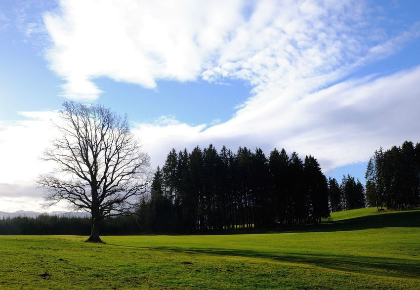 Plant Cloud - Sky Landscape Environment Tranquil Scene Green Color Bare Tree Outdoors Nature Field Land