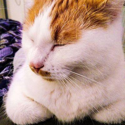 Catlife Chilling Meow Brummer