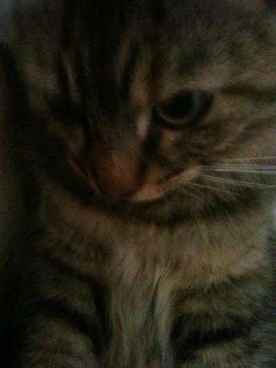 Kitty Cat <3
