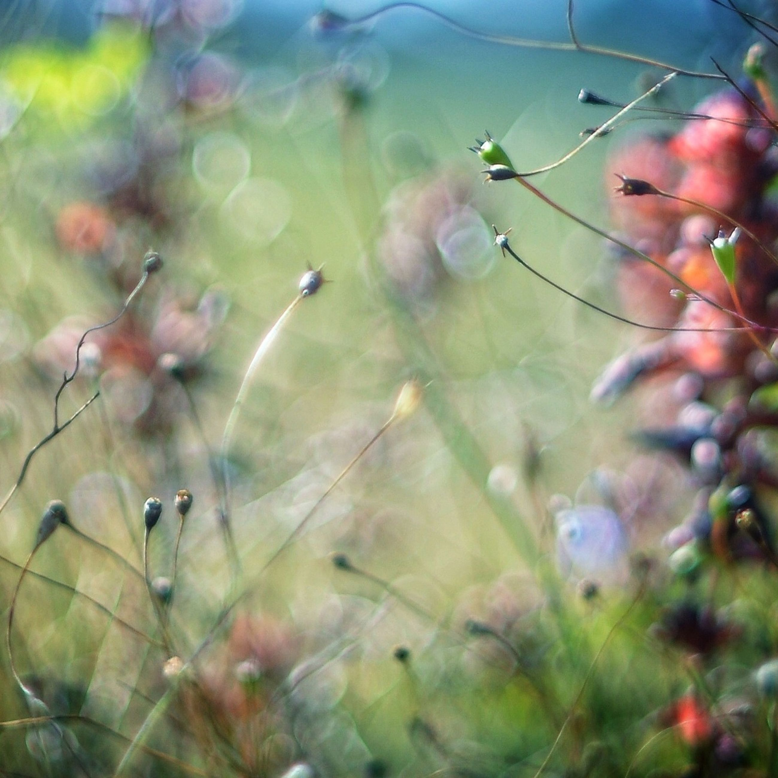 growth, focus on foreground, close-up, plant, nature, selective focus, fragility, beauty in nature, freshness, leaf, stem, green color, day, bud, twig, outdoors, no people, spider web, branch, flower