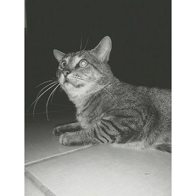 Cat ? Vscocam Vscobrasil Cat