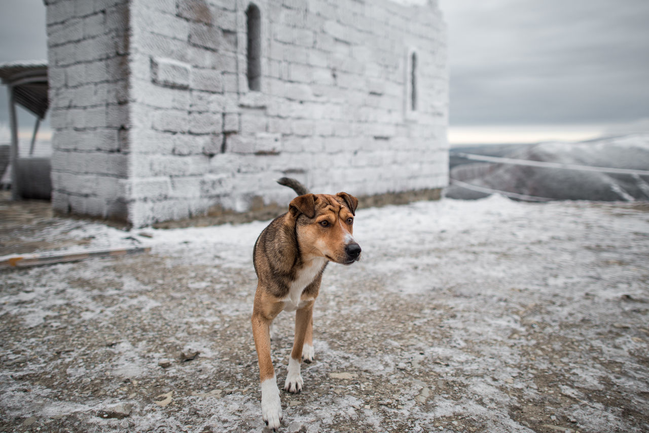 Animal Themes,  Architecture,  Built Structure,  Canine,  Cold Temperature