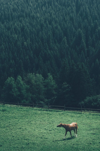 Beautiful horse in South Tyrol, Italy Alto Adige Animal In Nature Animals Be Wild Beauty In Nature Countryside Farm Farm Life Feeling Wild Grass Green Color Green Tones Horse Horse Life Idyllic Italy Lonely Horse Mood Nature Sidebar South Tyrol Tranquility Wild Feelings Wilderness