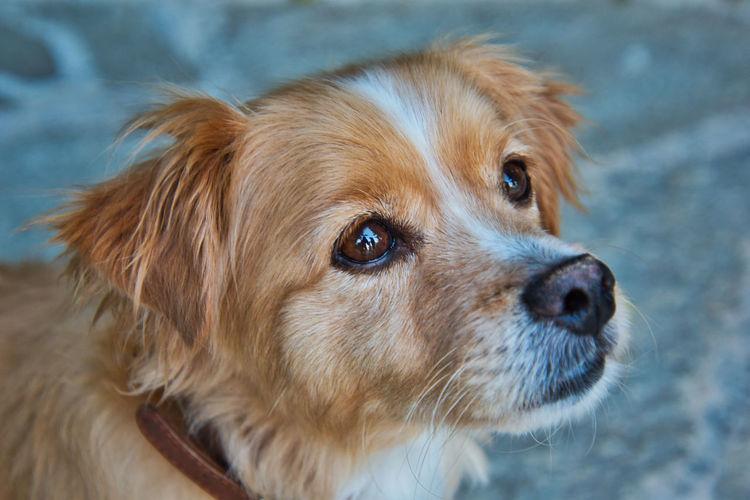 Dog Animal Pets Animal Themes Animal Eye Portrait Brown Close-up