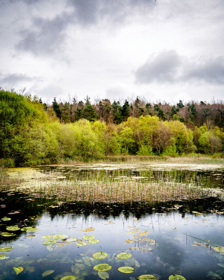 Curraghchase 🌳🌲🌳 Beauty In Nature Cloud - Sky County Limerick Curraghchase Day Forest Grass Growth Ireland Lake Landscape Marsh Nature No People Outdoors Plant Reflection Scenics Sky Tranquility Tree Water The Great Outdoors - 2017 EyeEm Awards