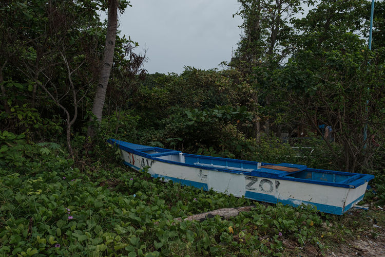 Boat moored on land by trees in forest against sky