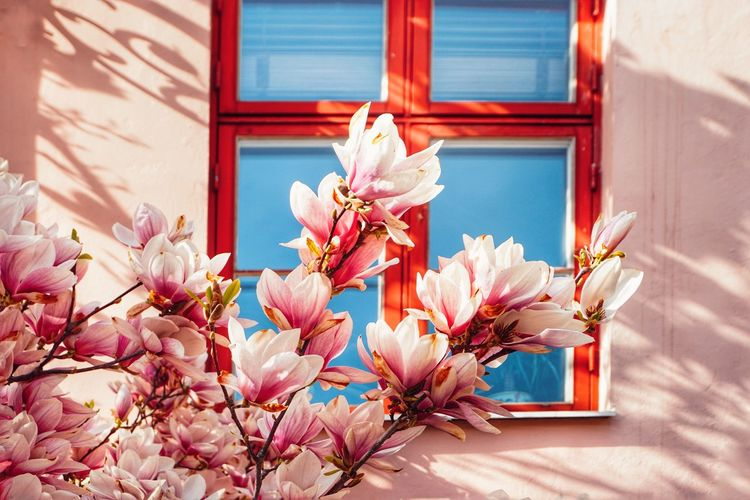 2019 Niklas Storm April Flower Flower Head Sunlight Pink Color Close-up Building Exterior Architecture Blossom In Bloom Plant Life Petal Blooming My Best Photo