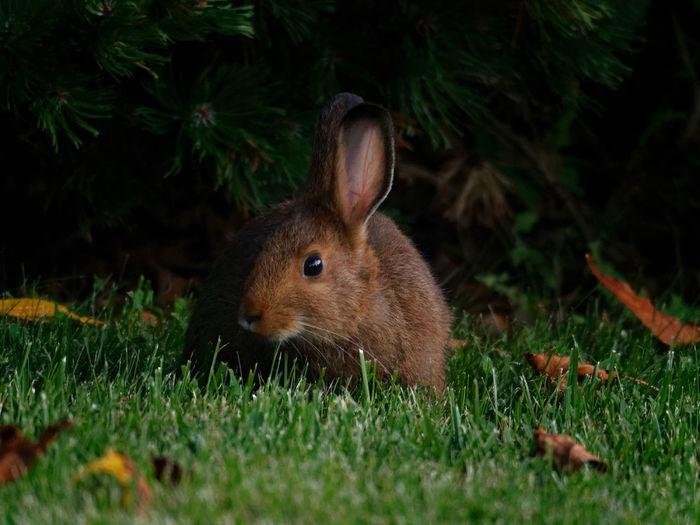 Evening Bunny