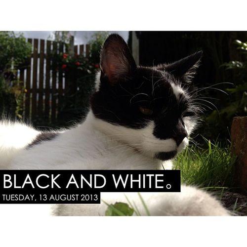 Photooftheday InstaCC Instacccolorsd5 Blackandwhite Cat Cats Catlovers Catsofig Catsofinstagram Petsofig Petsofinstagram Petlovers Petoftheday Catoftheday K8marieuk Nottinghamshire Photo365 Daisy Summer Sunny 130813