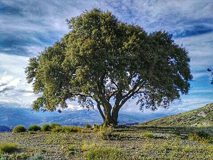 Tree Mountain Arbol. Montañas❤ Fine Art Photography