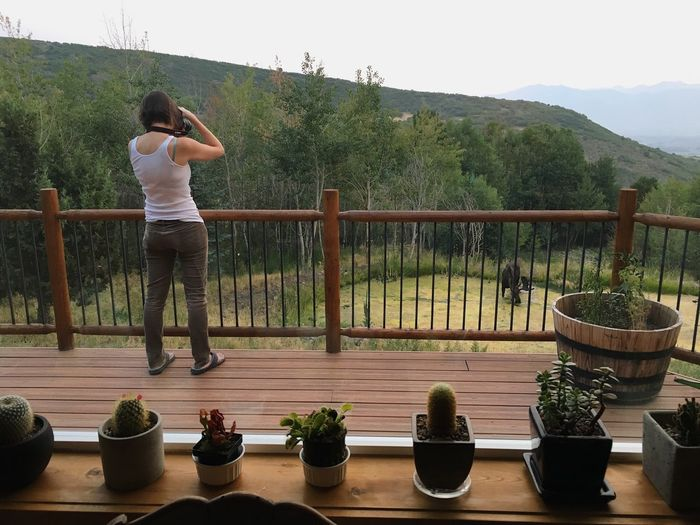 when taking photos of the sunset turn into taking photos of a moose in the pond. Moose Wasatch Mountains Wasatch Back Plant One Person Real People Standing Full Length Women Railing