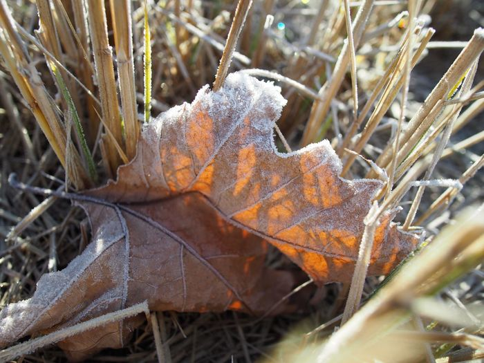 Autumn Autumn Colors Beauty In Nature Close-up Crop  Day Field Leaf Nature No People Outdoors Plant Sunshine Tree