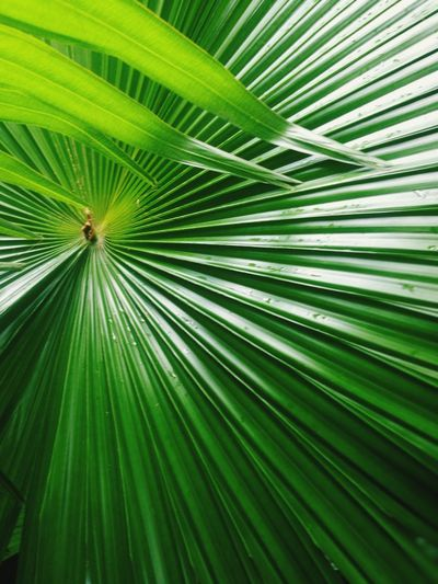 leaf Tree Palm
