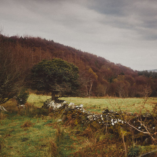 Agriculture Animal Themes Beauty In Nature Day Field Forest Grass Growth Haystack Ireland Landscape Nature No People Old Fence Outdoors Rural Scene Scenics Sky Square Stone Fence Tranquil Scene Tranquility Tree