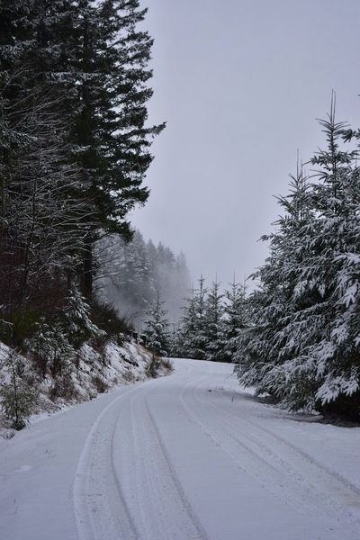 Cold Temperature Snow Winter Tree Weather Nature The Way Forward Road Beauty In Nature Day Outdoors Transportation Tranquil Scene Scenics Covering No People Tranquility Cold Sky Snow Covered Logging Roads Road Beauty In Nature Winter Snow ❄