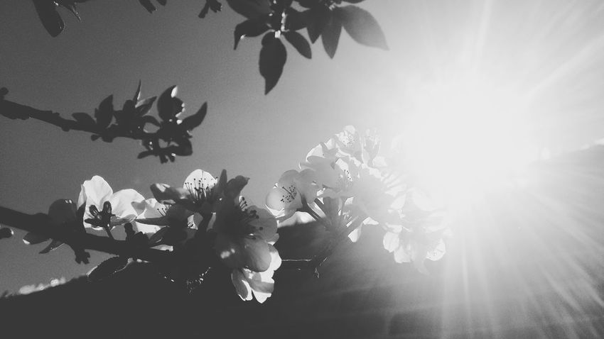 Nature Plant Beauty In Nature Sky Flower Day No People Nature Lover Naturephotography Petal Nature Flower Photography Photography Flowerstagram The City Light EyeEmNewHere