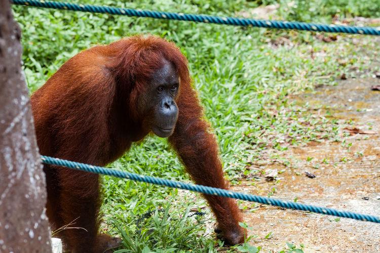 Portrait of a monkey in zoo