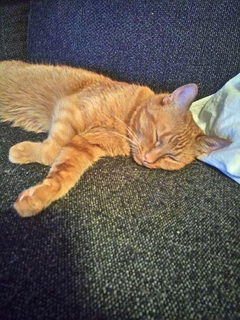 Mycat♥ Sleeping Cat♡