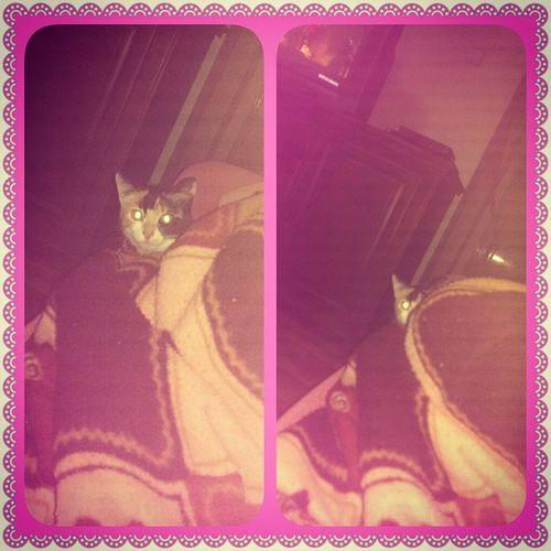 Ve küçük kız şeker gizli görevde şeker Cat Gizli_görev Photogrid
