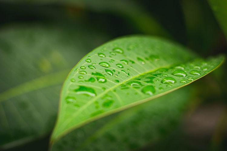 Leaf 🍃 MRoZAM