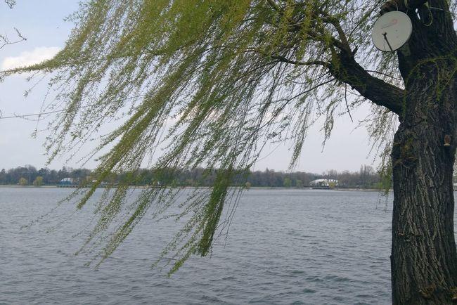 Tree Water Nature Lake Outdoors Sky Beauty In Nature Huawei P9 Leica Tree Nature