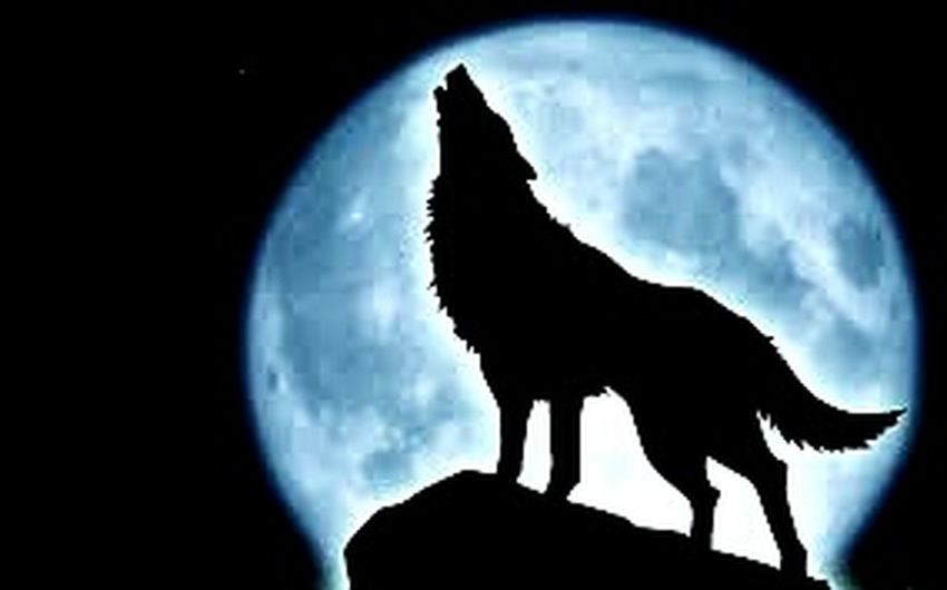 Be your self and you will be like wolf 👌💪🐺 Wolf Be Your Self Taking Photos Enjoying Life That's Me