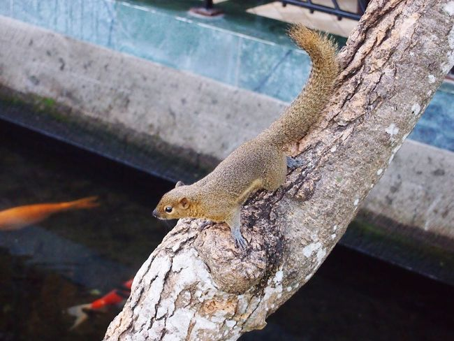 Animals In The Wild Animal Themes One Animal Animal Wildlife Tree Day Nature Outdoors No People Tree Trunk Reptile Branch Perching Mammal Close-up Squirrel