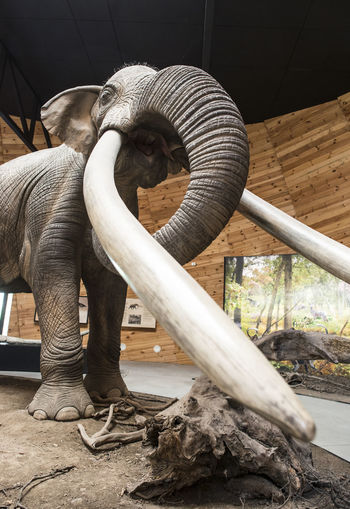 Mamut Mammoth Arheologic Museum Archaeology Old Ancient Representation Elephant Art And Craft Mammal Sculpture Creativity No People Statue Indoors  Day Craft One Animal Architecture Animal Trunk Full Length Nature